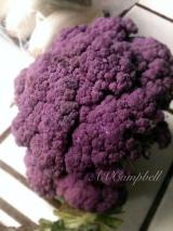 PURPLE Cauliflower AND March PhotoChallenge!